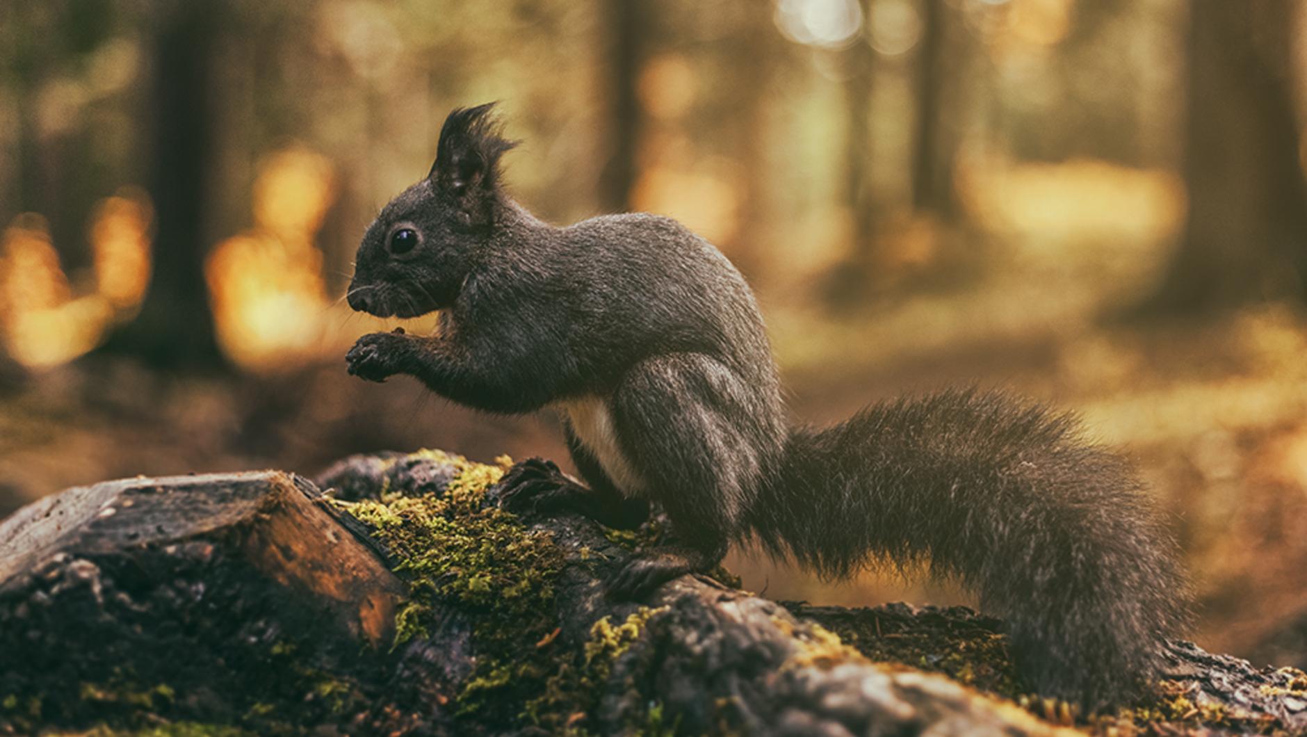 Eichhörnliweg (squirrel path)